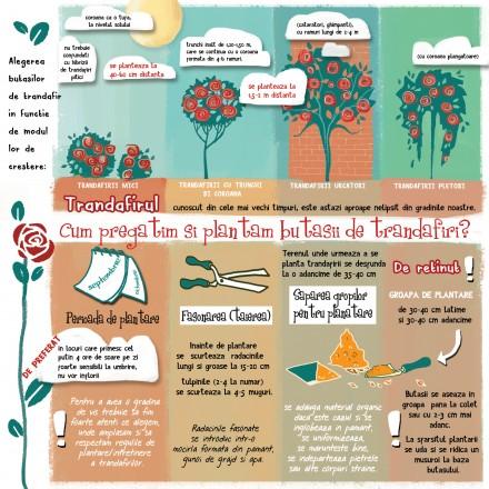 Gardening Infographics