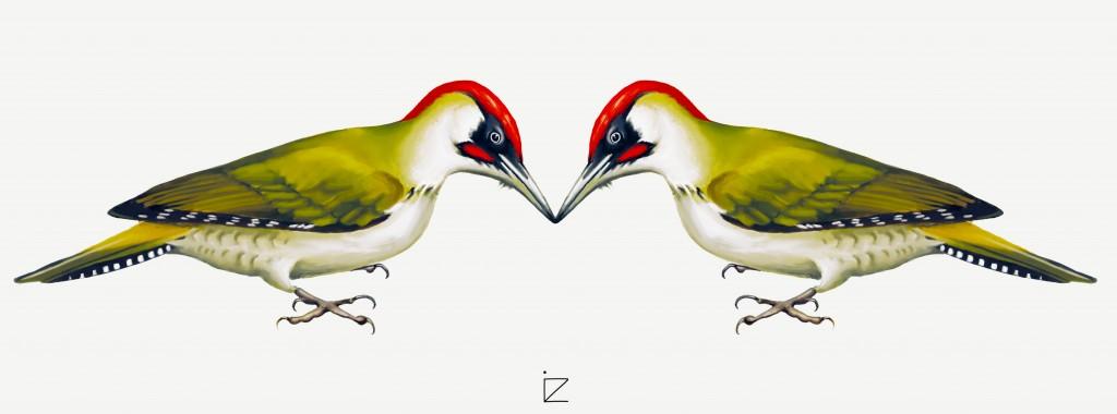 ciocanitoare verde